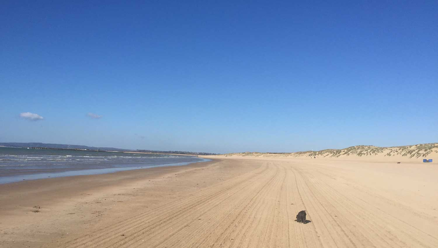 Camber Sands Dog Friendly